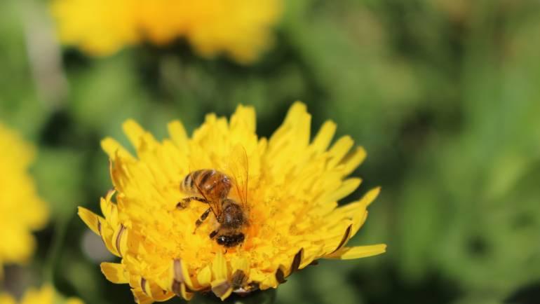 Come faccio a sapere che un miele ha nettare di un solo fiore?
