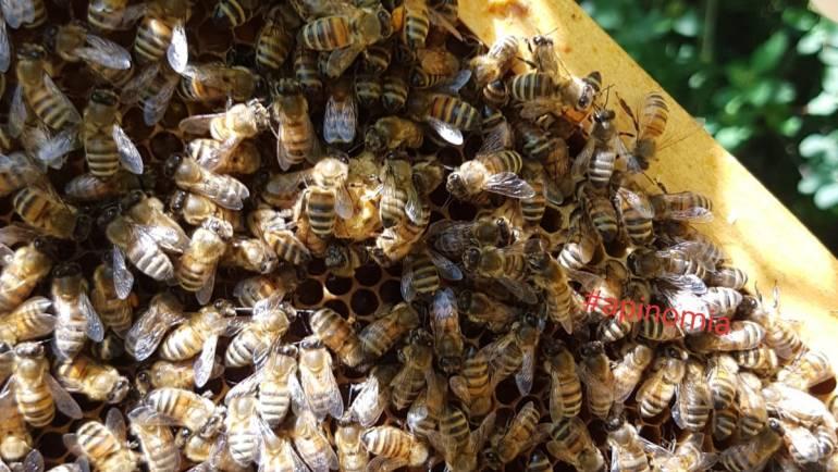 Le api hanno caldo in estate?